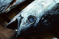 Depleted marine stocks from overfishing